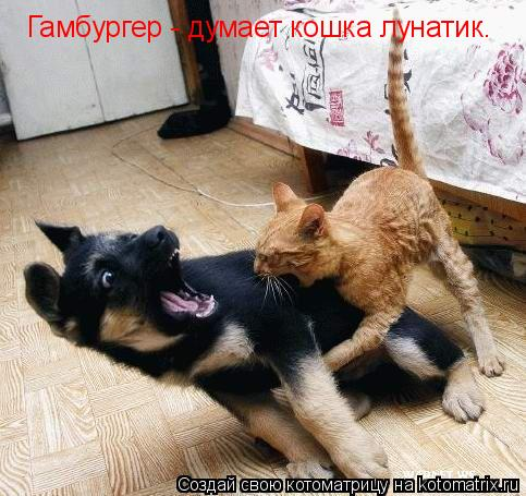 Котоматрица: Гамбургер - думает кошка лунатик.