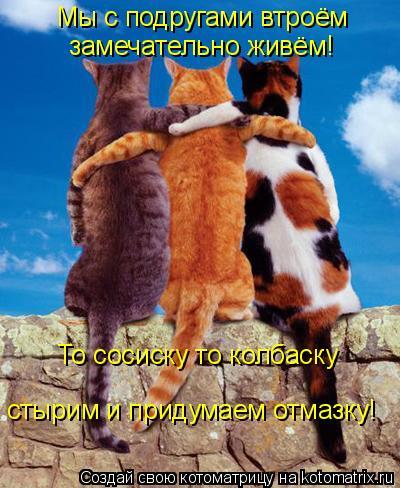 Котоматрица: Мы с подругами втроём замечательно живём! То сосиску то колбаску стырим и придумаем отмазку!