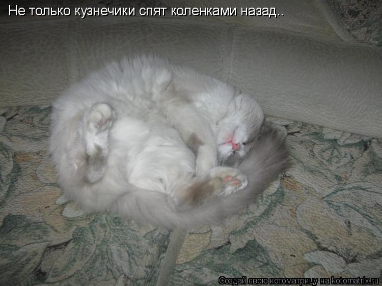 Котоматрица: Не только кузнечики спят коленками назад..
