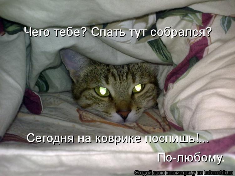 Котоматрица: Чего тебе? Спать тут собрался? Сегодня на коврике поспишь!...  По-любому.