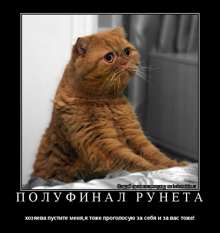 Котоматрица: полуфинал Рунета хозяева пустите меня,я тоже проголосую за себя и за вас тоже!