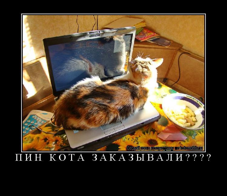 Котоматрица: пин кота заказывали????