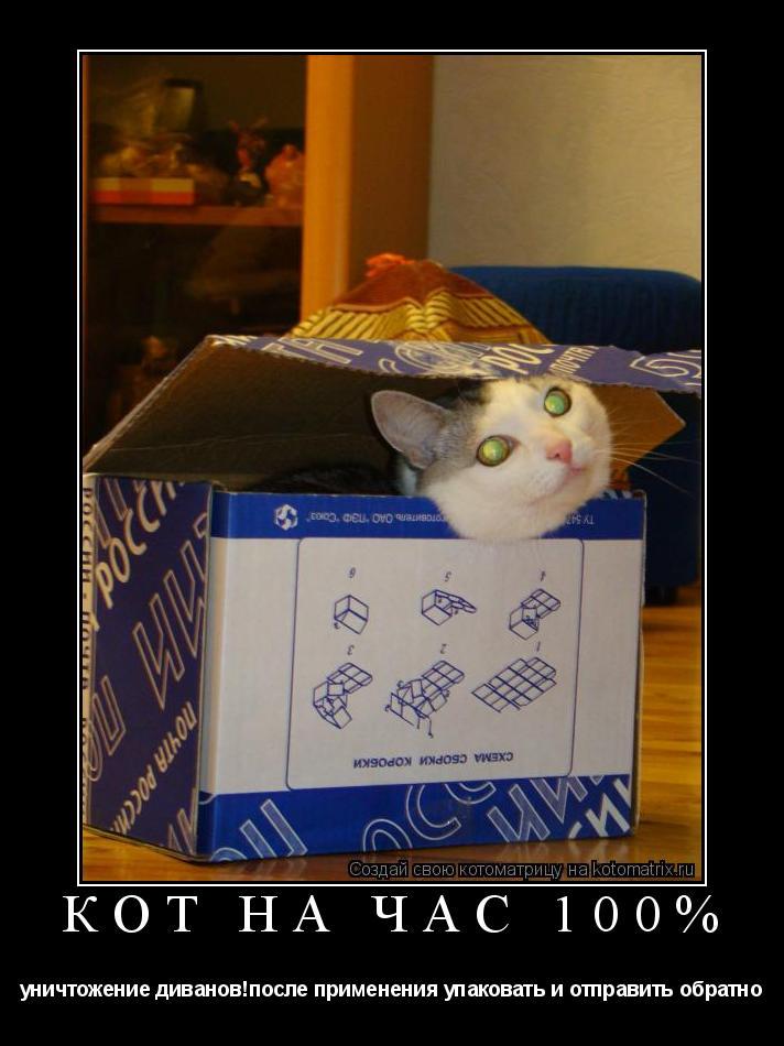 Котоматрица: Кот на час 100% уничтожение диванов!после применения упаковать и отправить обратно