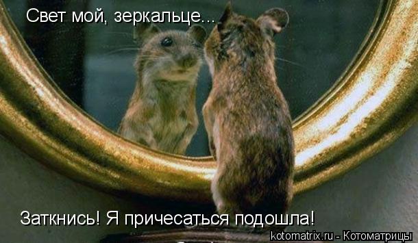 Котоматрица: Свет мой, зеркальце...  Заткнись! Я причесаться подошла!