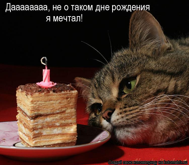 Котоматрица: Даааааааа, не о таком дне рождения я мечтал!