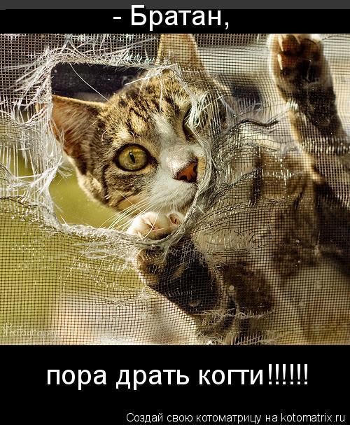 Котоматрица: - Братан, пора драть когти!!!!!!