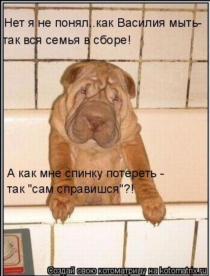 """Котоматрица: Нет я не понял..как Василия мыть-  так вся семья в сборе! А как мне спинку потереть - так """"сам справишся""""?!"""