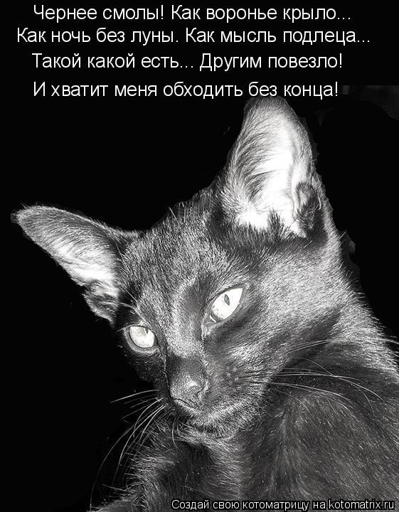 Котоматрица: Чернее смолы! Как воронье крыло... Как ночь без луны. Как мысль подлеца... Такой какой есть... Другим повезло! И хватит меня обходить без конца!