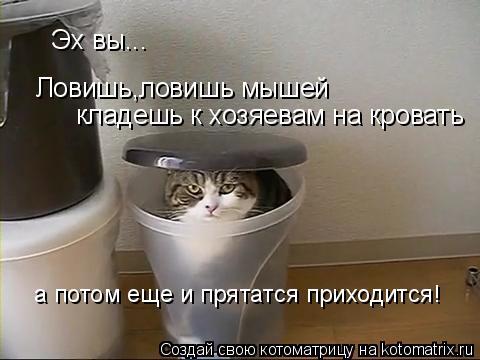 Котоматрица: Эх вы... Ловишь,ловишь мышей  кладешь к хозяевам на кровать а потом еще и прятатся приходится!