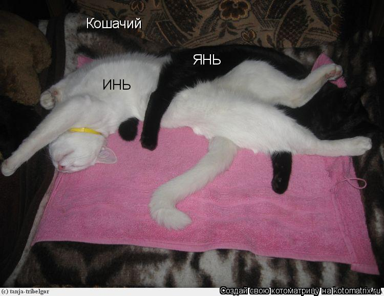 Котоматрица: Кошачий ИНЬ ЯНЬ