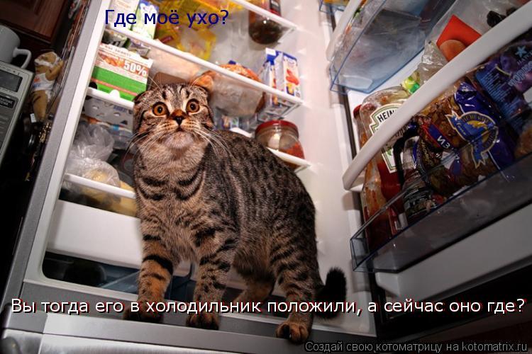 Котоматрица: Где моё ухо? Вы тогда его в холодильник положили, а сейчас оно где? Вы тогда его в холодильник положили, а сейчас оно где?