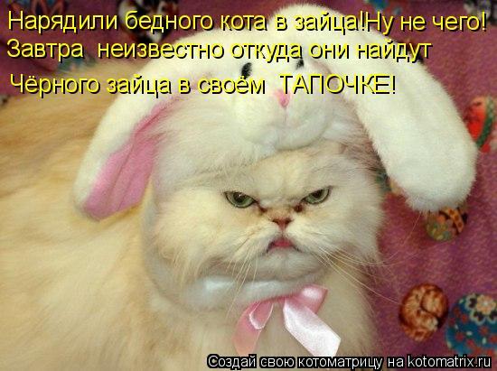 Котоматрица: Нарядили бедного кота в зайца! Ну не чего! Завтра  неизвестно откуда они найдут Чёрного зайца в своём  ТАПОЧКЕ!
