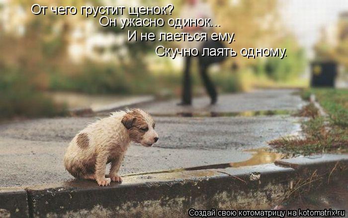 Котоматрица: От чего грустит щенок? И не лаеться ему. Он ужасно одинок... Скучно лаять одному.