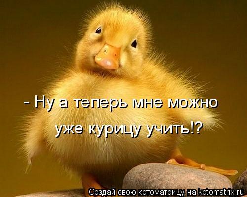 Котоматрица: - Ну а теперь мне можно  уже курицу учить!?