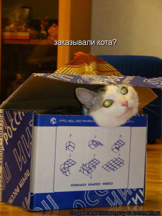 Котоматрица: заказывали кота?