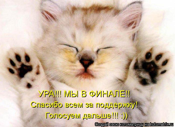 Котоматрица: УРА!!! МЫ В ФИНАЛЕ!! Спасибо всем за поддержку!  Голосуем дальше!!! :))