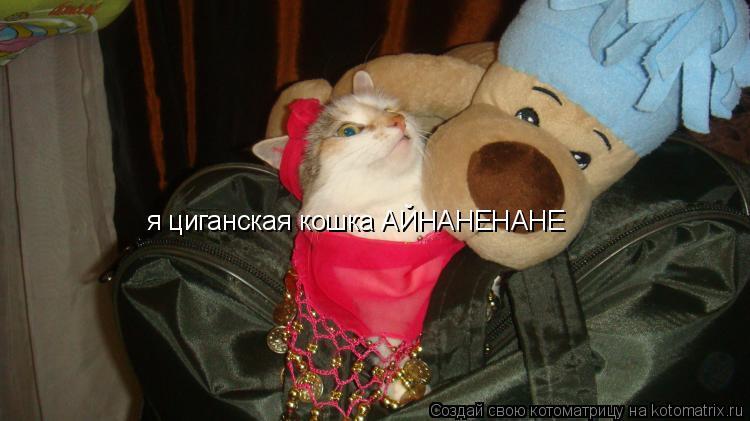 Котоматрица: я циганская кошка АЙНАНЕНАНЕ