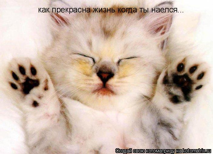 Котоматрица: как прекрасна жиз как прекрасна жизнь когда ты наелся...
