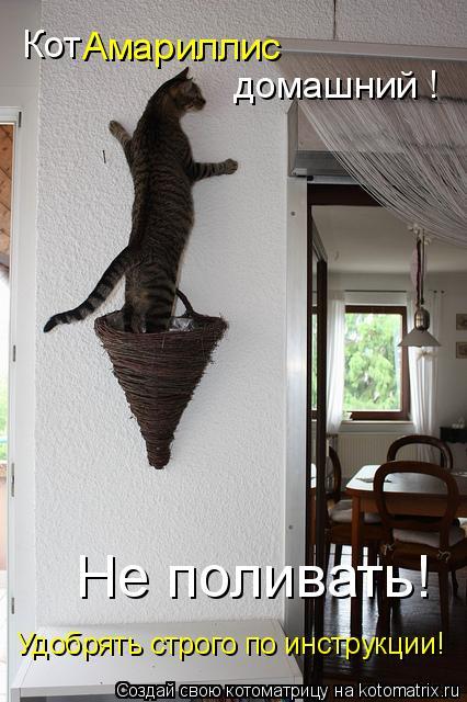 Котоматрица: Кот Амариллис домашний ! Удобрять строго по инструкции! Не поливать!