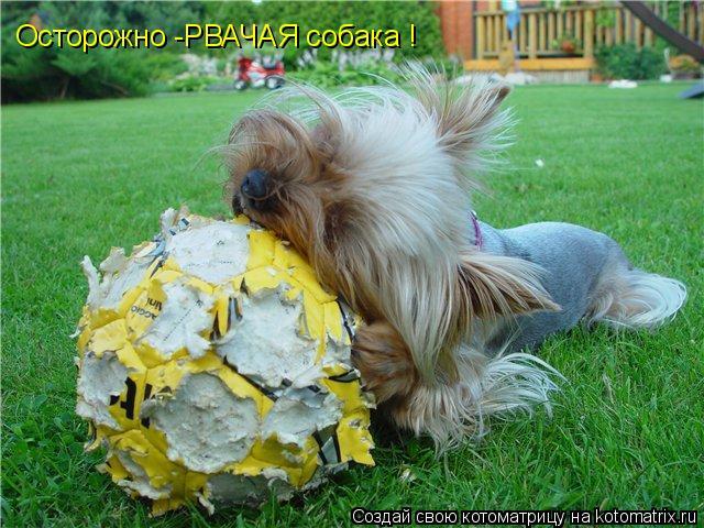 Котоматрица: Осторожно -РВАЧАЯ собака !