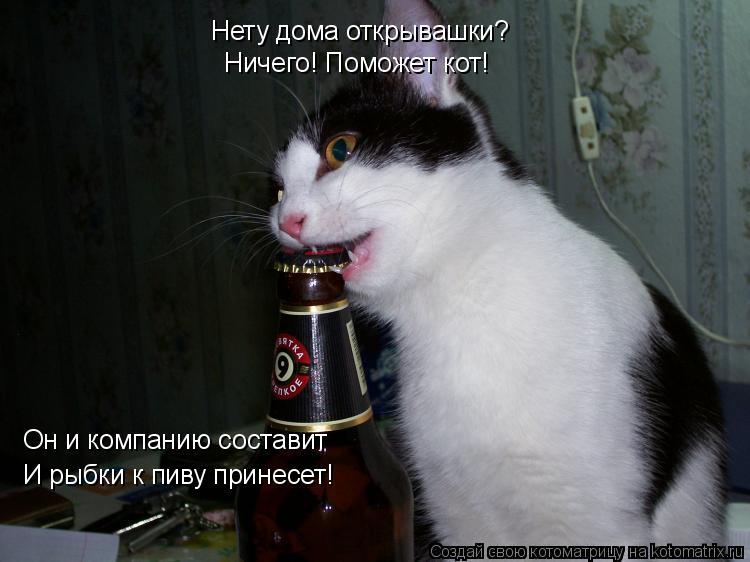 Котоматрица: Нету дома открывашки? Ничего! Поможет кот! Он и компанию составит И рыбки к пиву принесет!