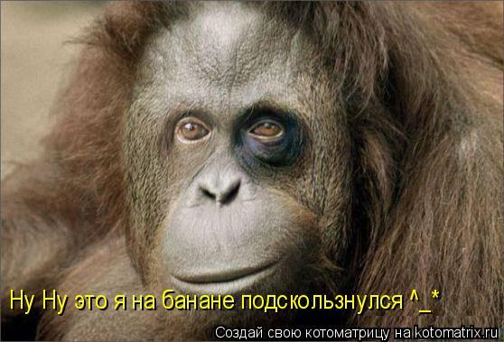 Котоматрица: Ну Ну это я на банане подскользнулся ^_*