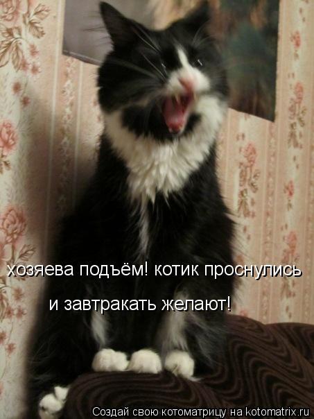 Котоматрица: хозяева подъём! котик проснулись и завтракать желают!