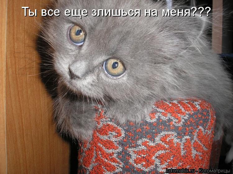 Котоматрица: Ты все еще злишься на меня???