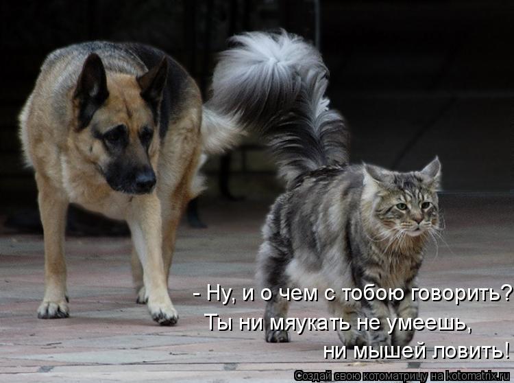 - Ну, и о чем с тобою говорить? Ты ни мяукать не умеешь, ни мышей лови
