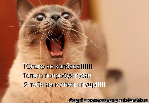 Котоматрица: ТОлько не колбаса!!!!!! Только попробуй кусни Я тебя на котлеты пущу!!!!!
