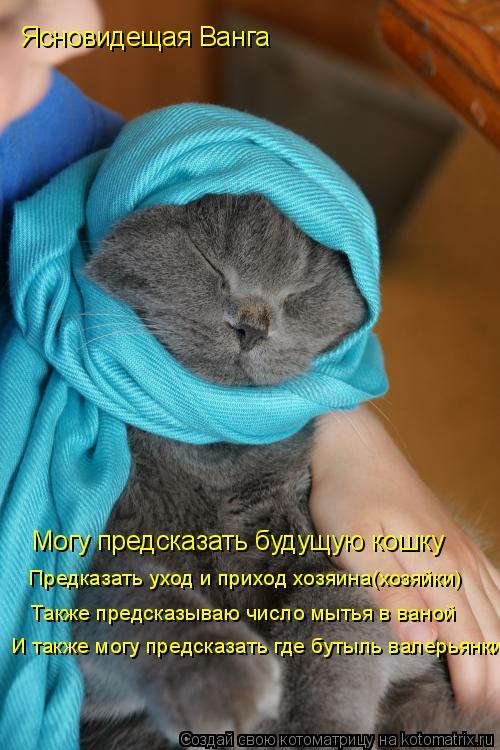 Котоматрица: Ясновидещая Ванга Могу предсказать будущую кошку Предказать уход и приход хозяина(хозяйки) Также предсказываю число мытья в ваной И также