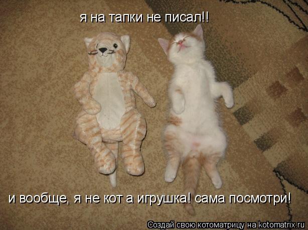 почему кошка подымает хвост и ссыт драгоценные зелёного