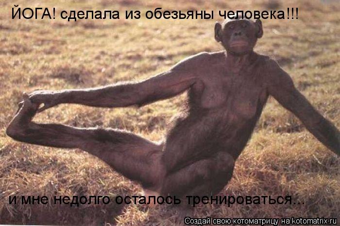 Котоматрица: ЙОГА! сделала из обезьяны человека!!! и мне недолго осталось тренироваться...