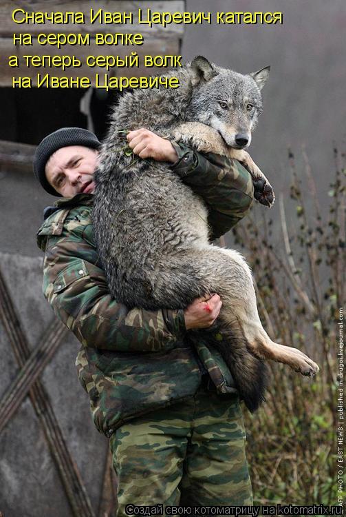 Котоматрица: Сначала Иван Царевич катался на сером волке а теперь серый волк на Иване Царевиче