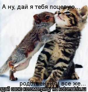 Котоматрица: А ну, дай я тебя поцелую... родственники все же...