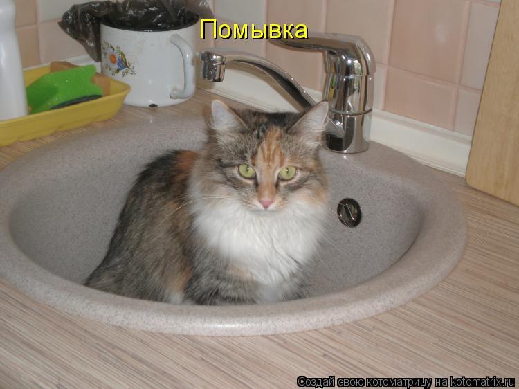 Котоматрица: Помывка
