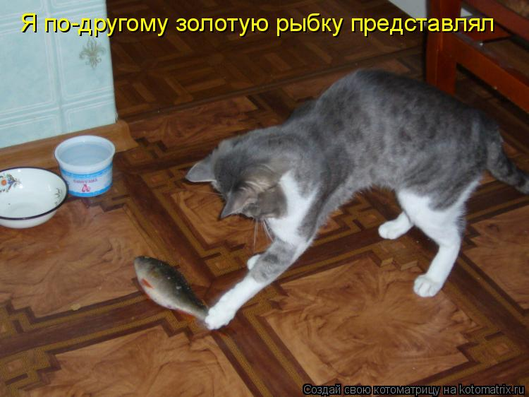 Котоматрица: Я по-другому золотую рыбку представлял