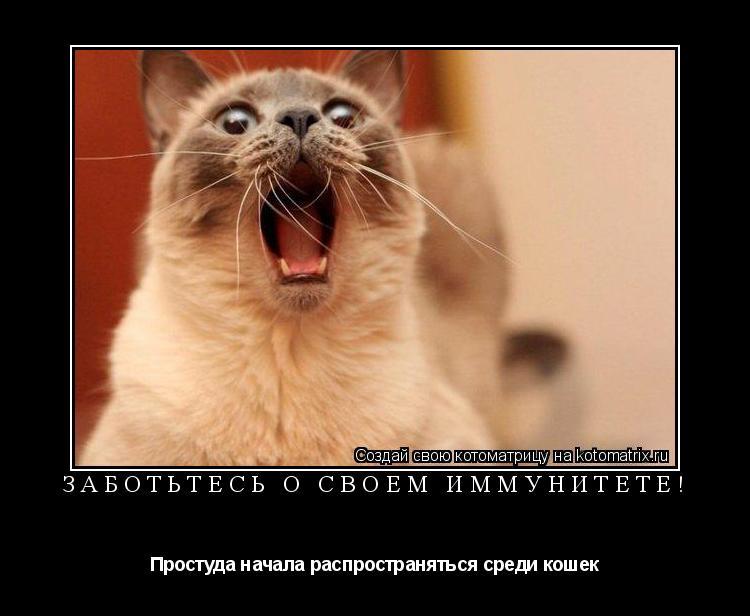 Котоматрица: Заботьтесь о своем иммунитете! Простуда начала распространяться среди кошек