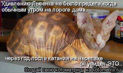 Котоматрица: Удивлению Львенка не было предела,когда обычным утром на пороге дома, через год после катания на черепахе он увидел ЭТО...