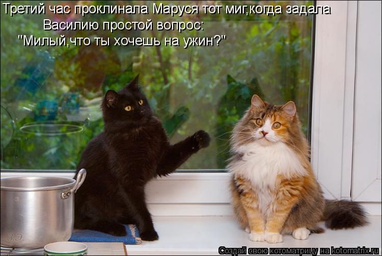 """Котоматрица: Василию простой вопрос: """"Милый,что ты хочешь на ужин?"""" Третий час проклинала Маруся тот миг,когда задала Третий час проклинала Маруся тот ми"""