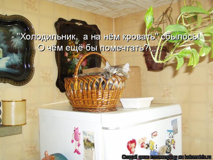 """Котоматрица: - """"Холодильник,  а на нём кровать"""" сбылось! О чём ещё бы помечтать?....."""
