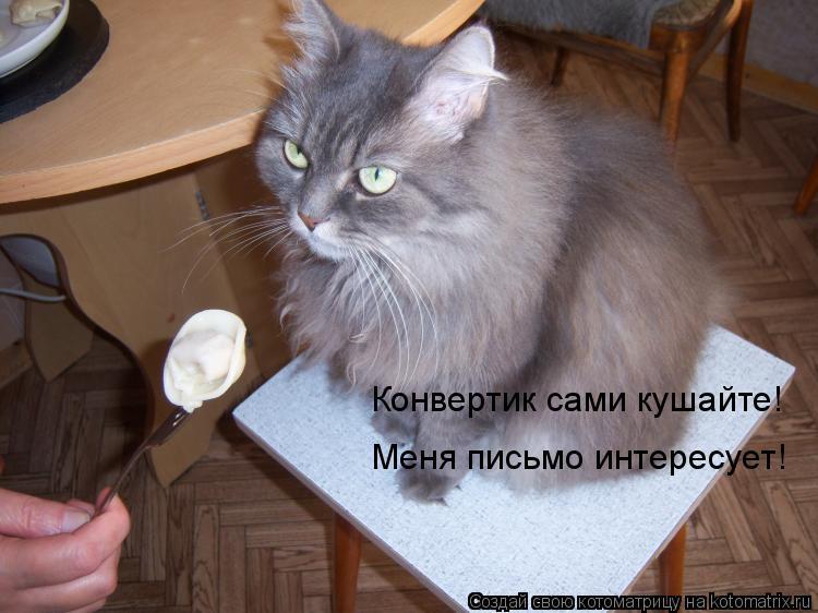 Котоматрица: Конвертик сами кушайте! Меня письмо интересует!