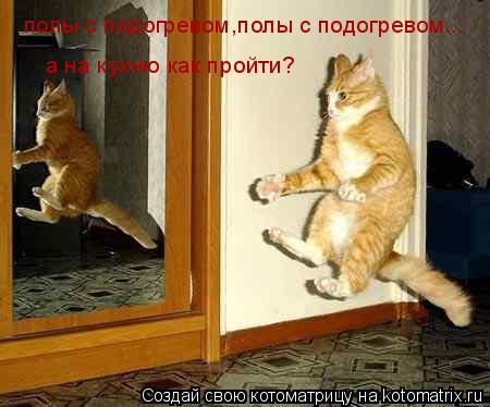 Котоматрица: полы с подогревом,полы с подогревом... а на кухню как пройти?