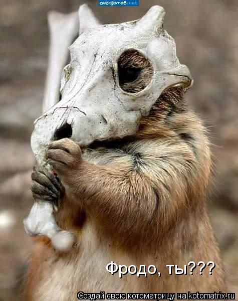 Котоматрица: Фродо, ты???