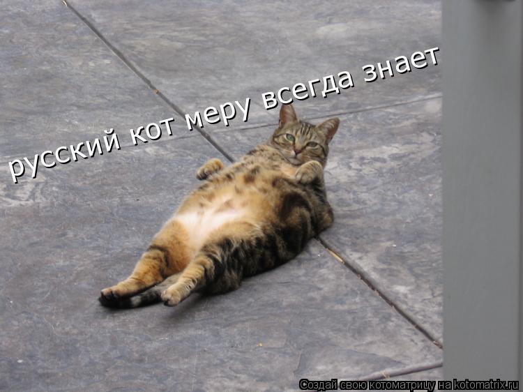 Котоматрица: русский кот меру всегда знает