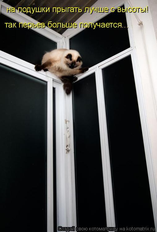 Котоматрица: на подушки прыгать лучше с высоты! так перьев больше получается...