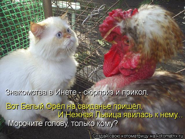 Котоматрица: И Нежная Львица явилась к нему... Морочите голову, только кому? Вот Белый Орёл на свиданье пришёл, Знакомства в Инете - сюрприз и прикол.
