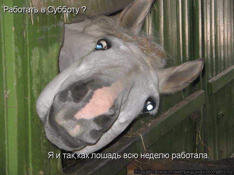 Котоматрица: Работать в Субботу ?                                                                       Я и так как лошадь всю неделю работала.               Я и т