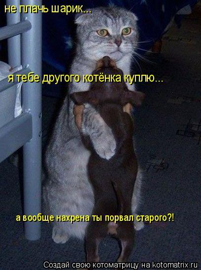 Котоматрица: не плачь шарик... я тебе другого котёнка куплю... а вообще нахрена ты порвал старого?!