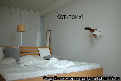 Котоматрица: Кот-псих!